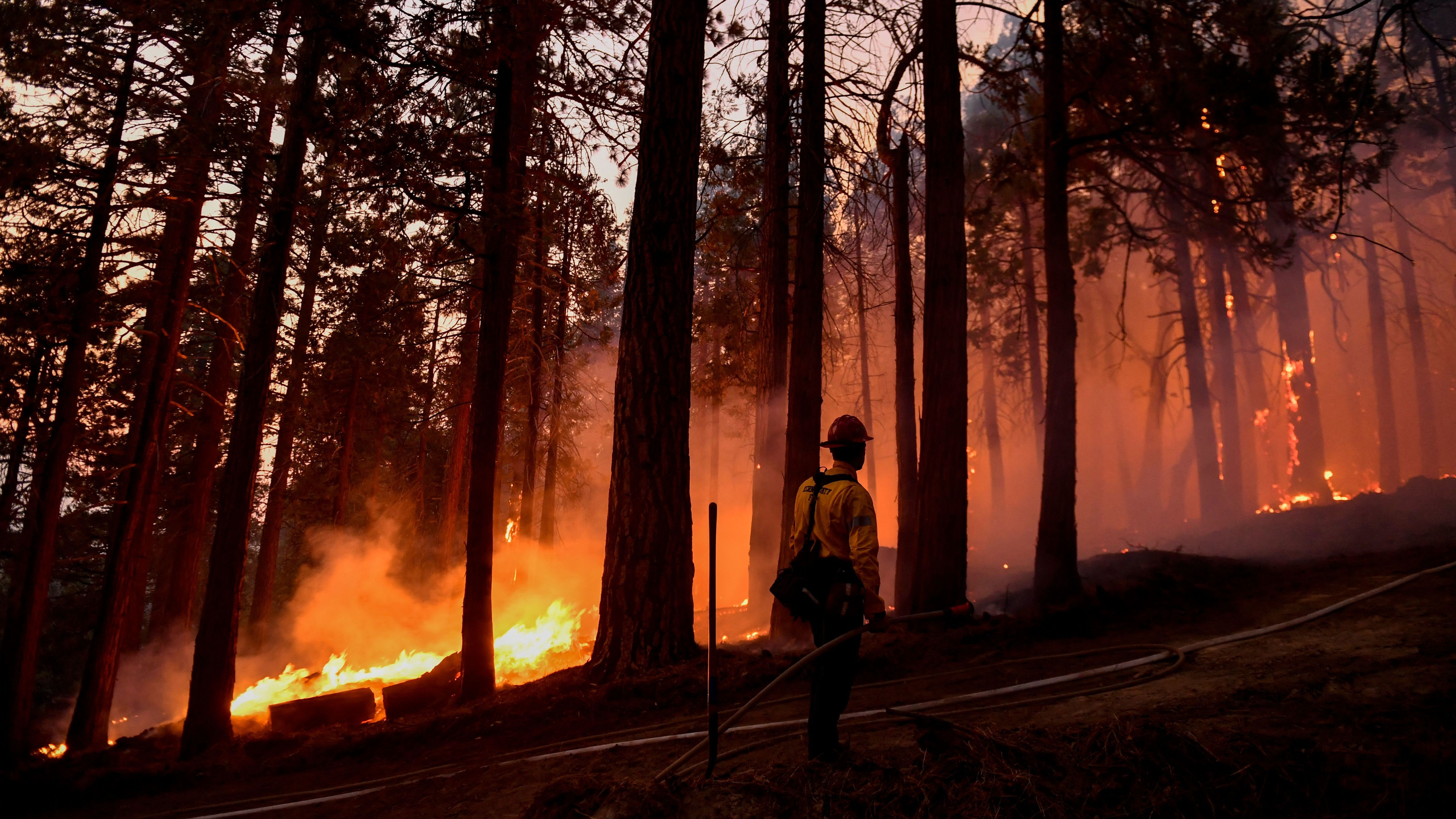 A Kern County firefighter keeps an eye on a burning tree as fire burns closer to homes during the French Fire in the Sequoia National Forest near Wofford Heights, Calif., this month.