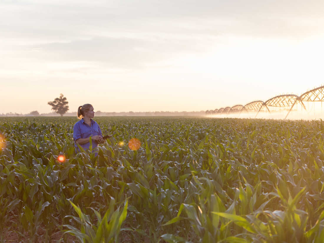 Carly Marriott looks over a irrigation in a corn field