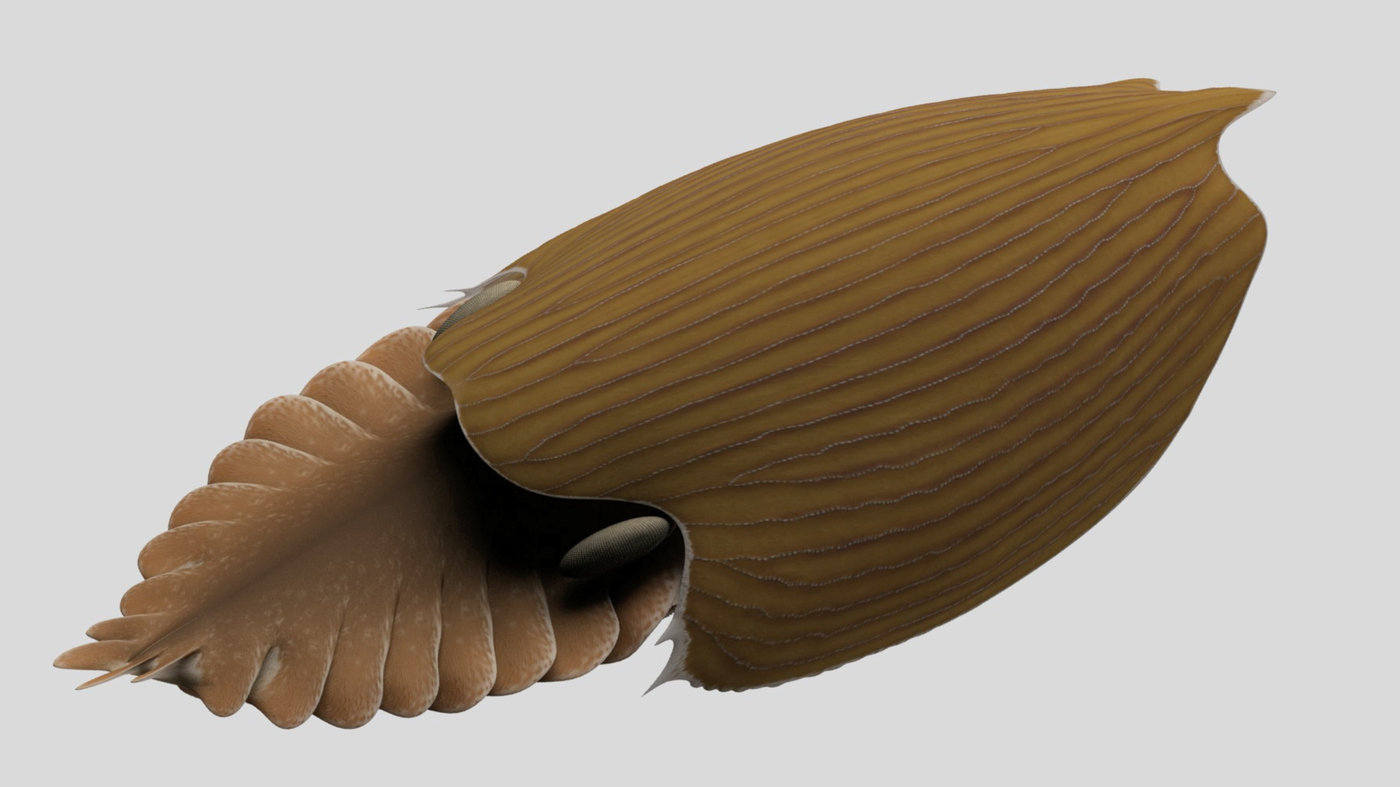 A Football-Shaped Animal Species Is Discovered In A 500-Million-Year-Old Shale