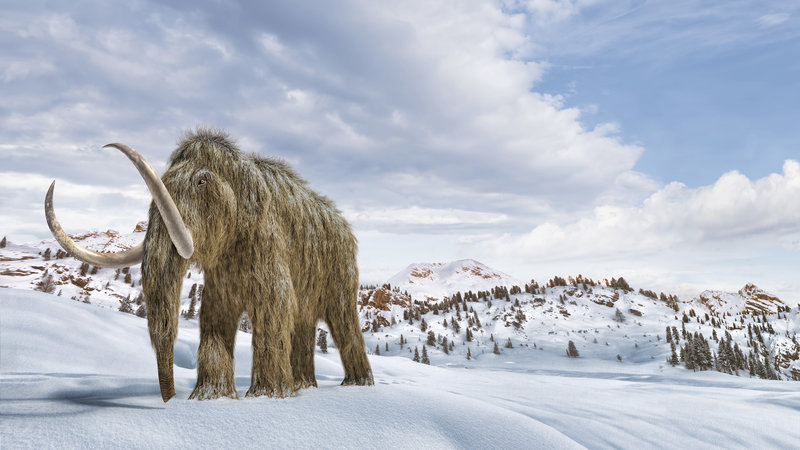 An artist's impression of a woolly mammoth in a snow-covered environment.