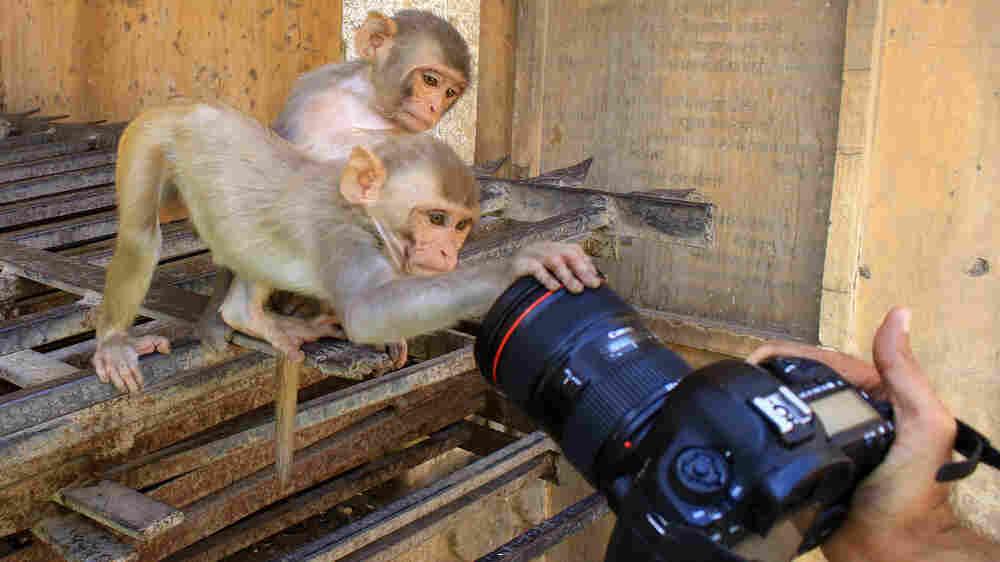 Monkey Thieves, Drunk Elephants — Mary Roach Reveals A Weird World Of Animal 'Crime'
