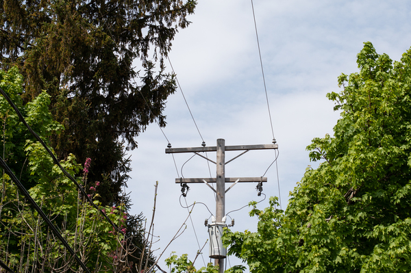 A patchwork of national and state regulations require utilities to trim around their power lines. More than a dozen of the country's largest utilities told NPR that falling trees and branches represent a leading cause of outages.