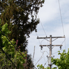 Climate Change Is Killing Trees And Causing Power Outages