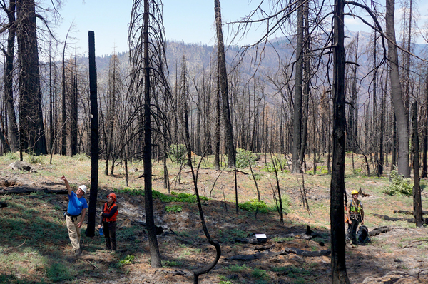 Researchers, including Scott Stephens (left), hope to identify which sequoia groves are most at risk from extreme fires in the hope of making them more fire-resistant.