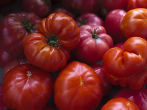 Tomatoes were first exported from South America to Spain and other parts of Europe in the mid-1500s but they were initially grown as an ornamental plant and were regarded with suspicion because botanists recognized it as a relative of the poisonous belladonna nd deadly nightshade.