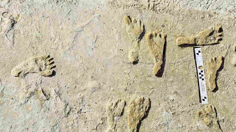Ancient Footprints Suggest Humans Lived In The Americas Earlier Than Once Thought