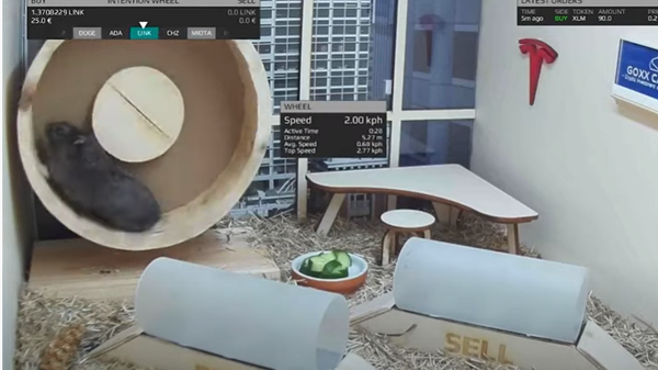 Spinning on the hamster wheel allows Mr. Goxx to select a cryptocurrency to trade. Choosing one of two tunnels to run through allows him to buy or sell.