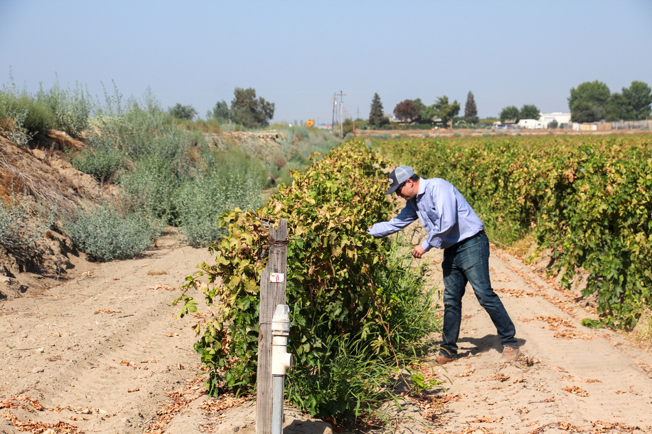 Jon Reiter, an adviser to several agricultural companies, checks out a vineyard that the owner could convert into a site to capture and store water.