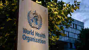 World Health Organization Says Its Staff Perpetrated 'Harrowing' Sexual Abuse In Congo