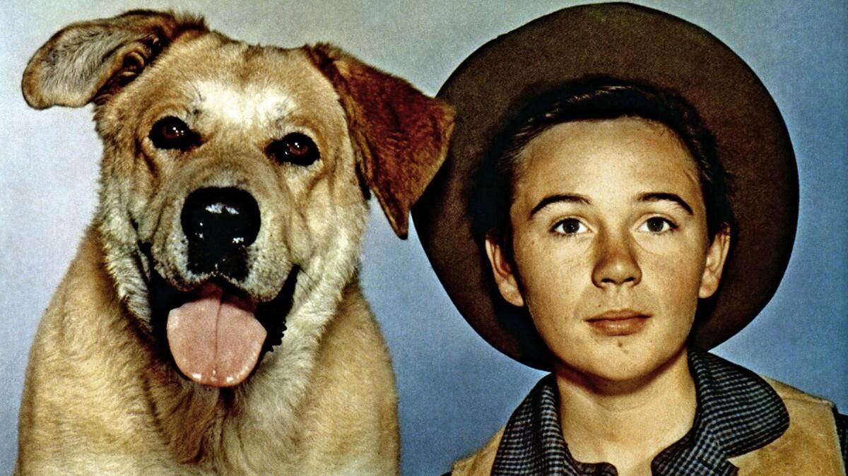 Old Yeller Child Actor Tommy Kirk Dies Aged 79: NPR