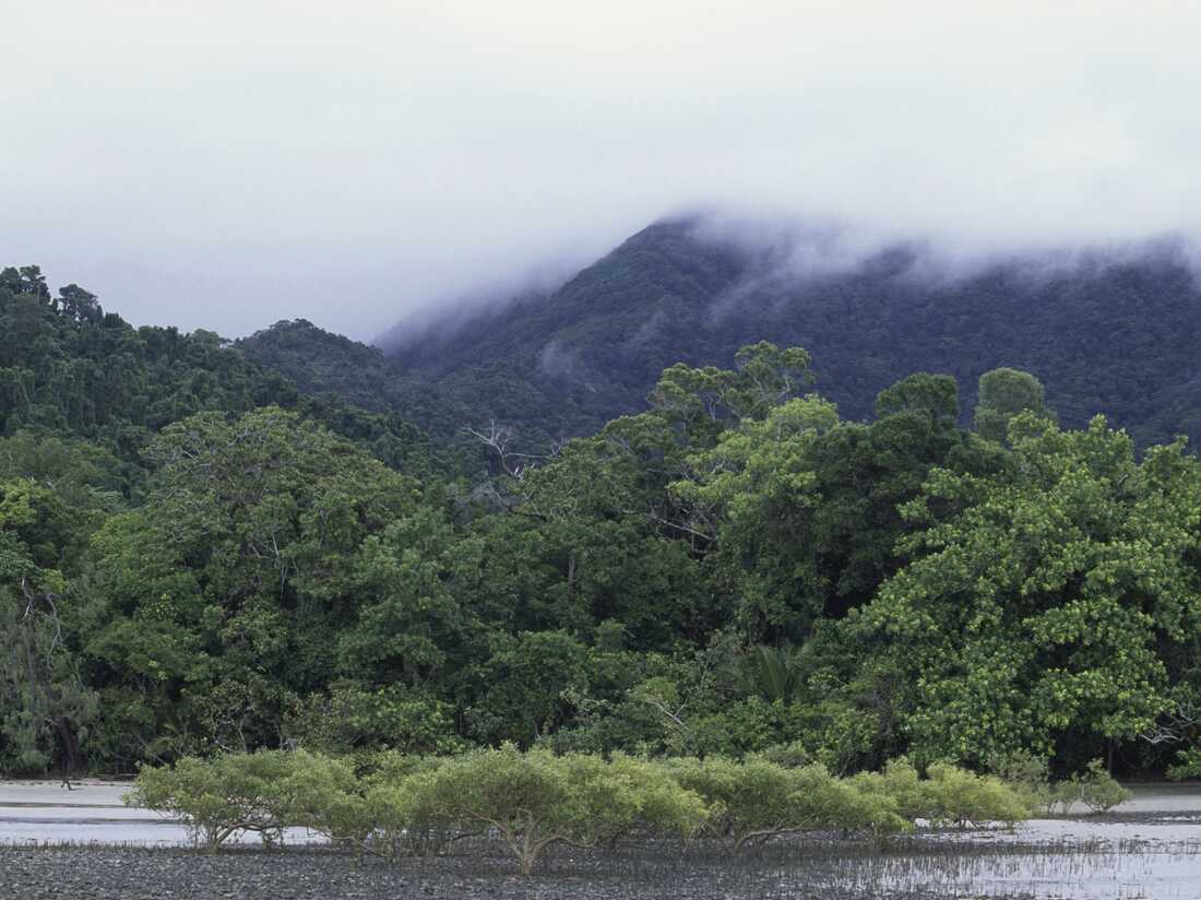 A historic rainforest and other lands have been returned to Indigenous Australians