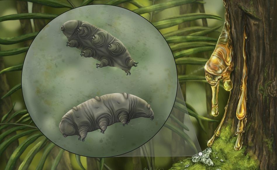An artistic reconstruction of Paradoryphoribius chronocaribbeus in moss.