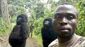A mountain gorilla, famous for a selfie, has died in her caretaker's arms