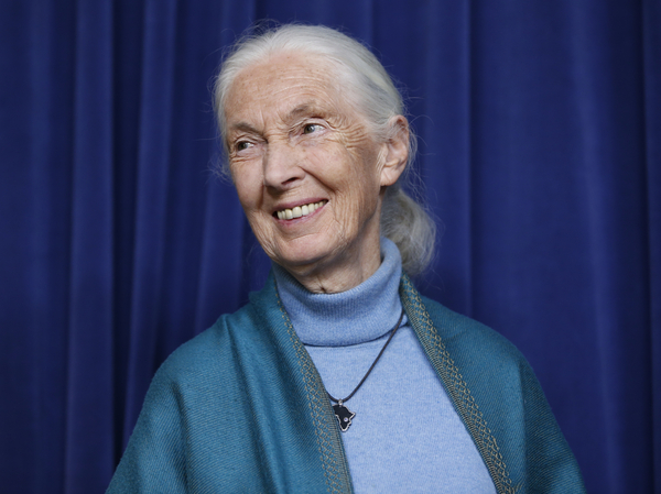 Primatologist Jane Goodall is honored for her lifetime achievements at a ceremony on her 85th birthday at City Hall in Los Angeles on April 3, 2019.