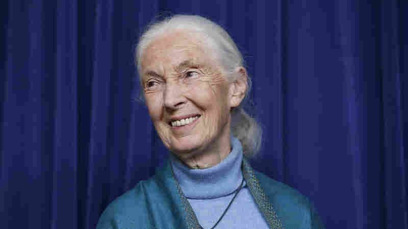 Jane Goodall encourages all to act to save Earth in 'The Book of Hope'