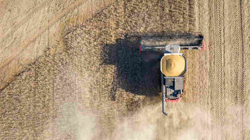 A biodiesel boom (and conundrum)