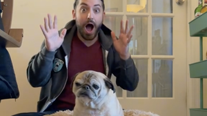 This floppy 13-year-old pug can tell you what kind of day you're going to have