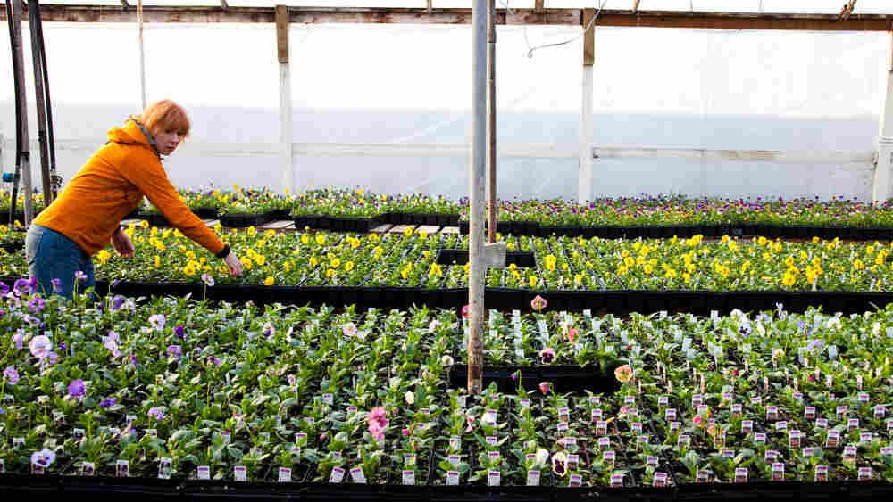 Lyn Robinson, 52, owns  owns Zenith Holland Gardens, a wholesale plant nursery