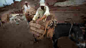 Workers load donkeys with sun-dried bricks to be carried to the kiln