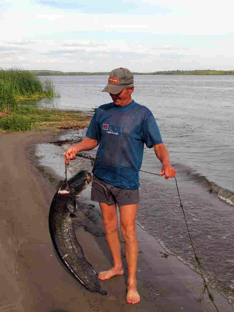 Gennady Anatolievich, 70, shows off a prize carp