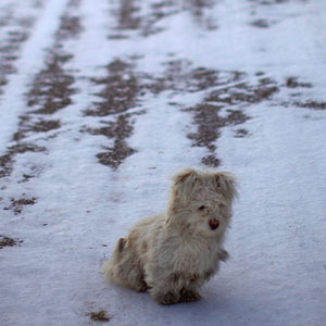 A small dog waits for scraps outside a grocery store. (David Gilkey/NPR)