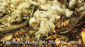 Fake cover for The Shins' 'Honey Poke Shimmy Lantern.'