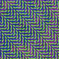 Merriweather Post Pavilion; Animal Collective