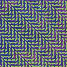 cover for animal collective