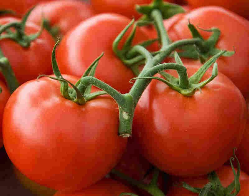 Pennsylvania grown hydroponic tomatoes