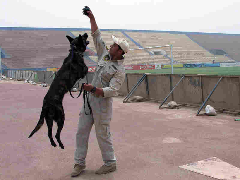 An Iraqi police officer and his dog help maintain security at Shaab soccer stadium in Baghdad.