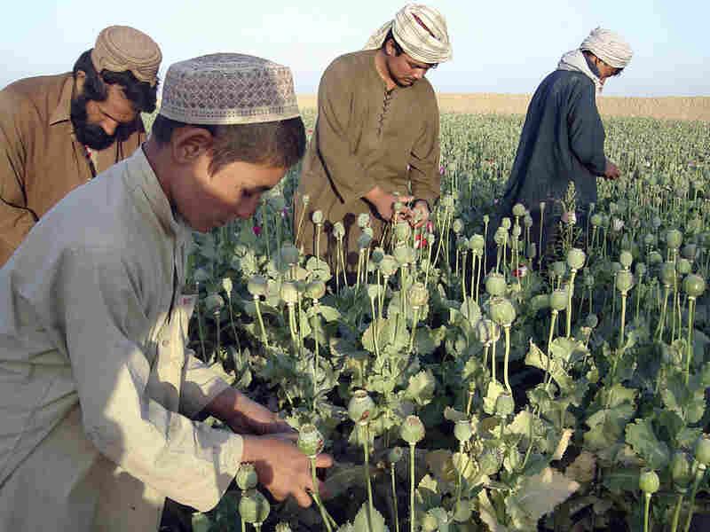 Afghan farmers