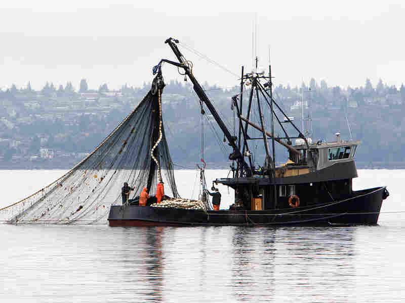 A fishing boat pulls in its net.