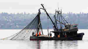 A fishing boat pulls in its net.