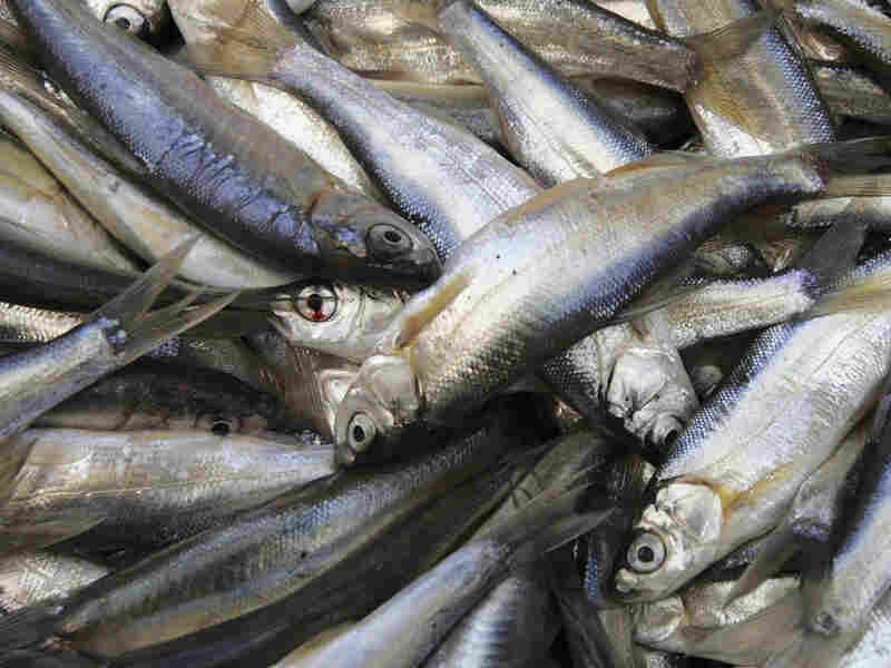 Sardines are packed with vitamin D.