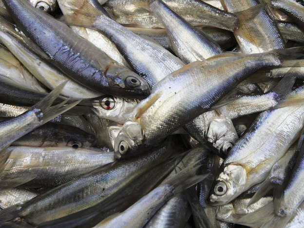 Sardines are naturally rich in vitamin D.  Recent research suggests that vitamin D deficiency could be linked to cardiovascular disease and diabetes, but further study is needed. (Getty Images)