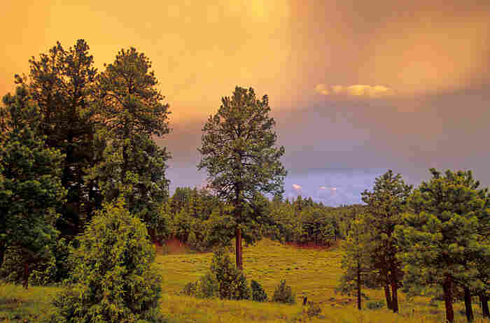 Ponderosa pine forest and meadow at sunset after a summer monsoon storm.