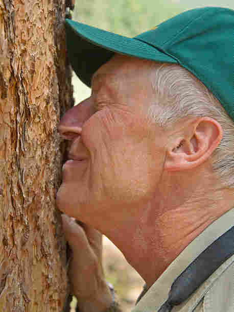 tall- Steve Hirst sniffing a ponderosa pine during a hike
