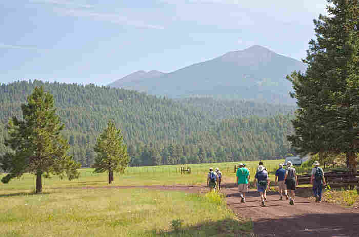 wide - With San Francisco Mountain as their background, hikers move alongside a strand of Ponderosa