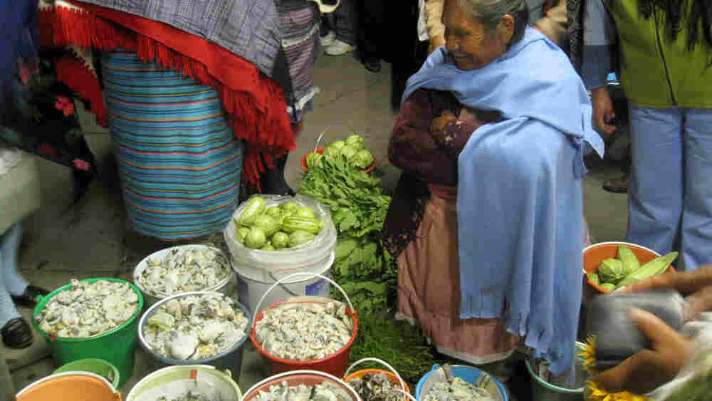Wide: Village woman sells buckest of cuitlacoche in Ixtlahuaca, Mexico.