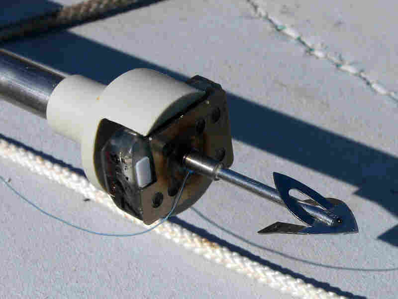 A harpoon with a satellite tag on the end is used to affix the tracking device to narwhals.