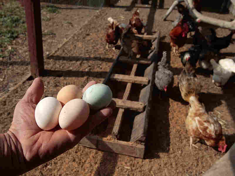 An independent farmer holds freshly harvested eggs in Ontario, Calif.