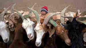 Global Financial Crisis Hits Mongolia's Grasslands