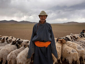 Global Financial Crisis Hits Mongolia's Grasslands