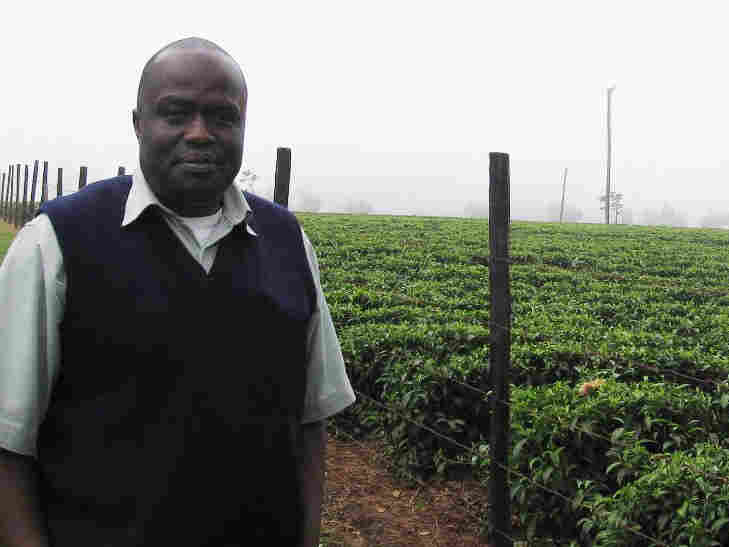Yusuf Masudi, a manager at Unilever Tea's Mabroukie Estate in Limuru, Kenya