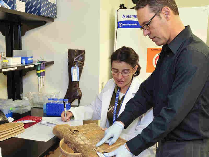 A researcher examines a crocodile skin purse.