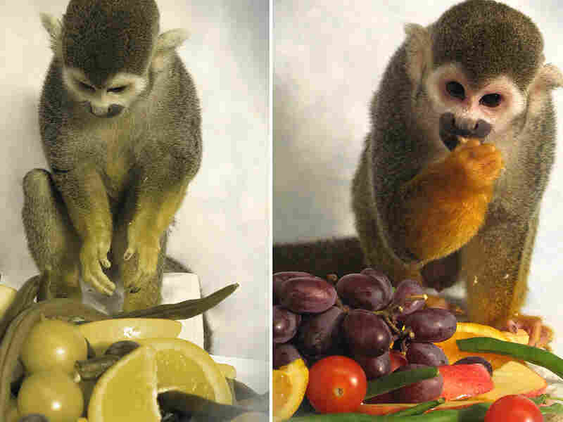 Dalton, who was treated for red-green color blindness, enjoys a feast