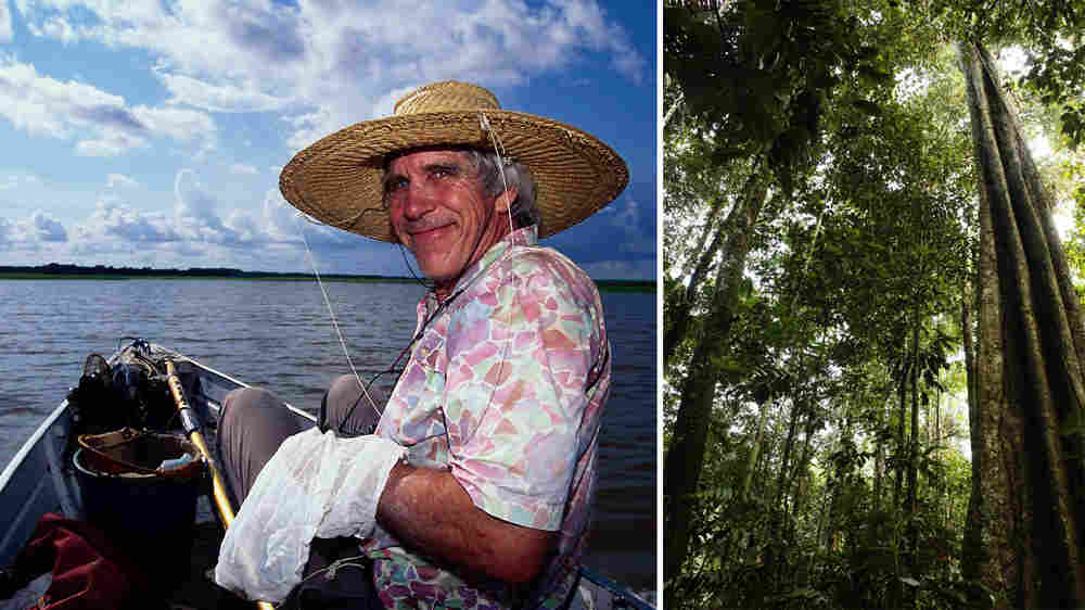 (Wide) Biologist William D. Hamilton and the Amazon forest that he loved.