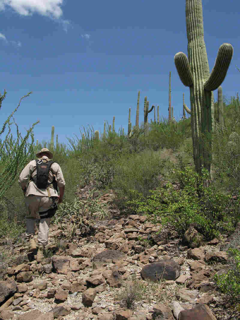 Border Patrol Search, Trauma and Rescue Agent Paul Dubois hiking in the Sonoran Desert
