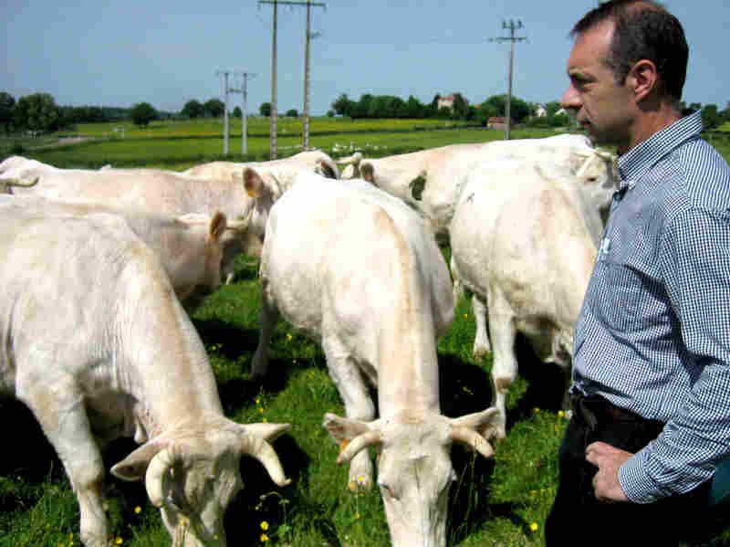 Michel Baudot raises cattle in France's Burgundy region.