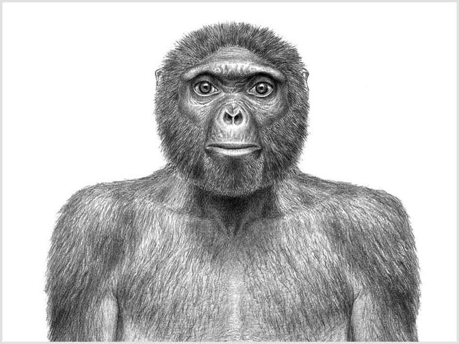 An artist's rendering of what Ardipithecus ramidus